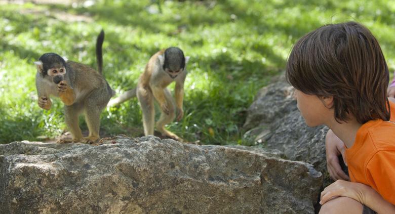 defiplanet parc vallee des singes