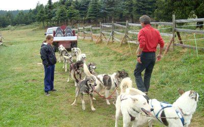 colonie chiens traineaux husky cani-kart