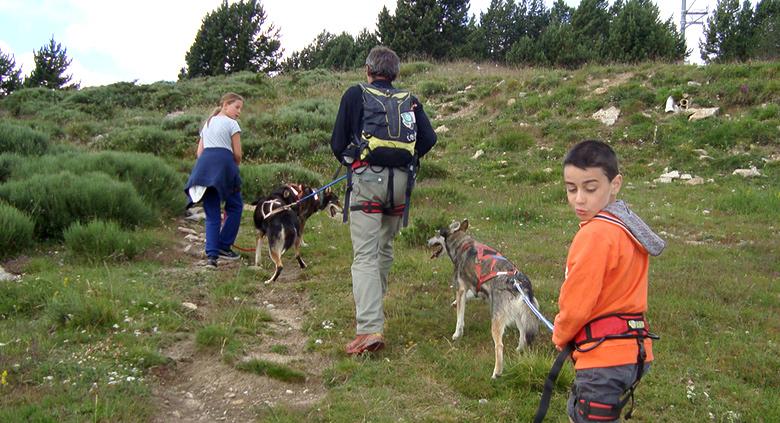 colonie chiens traineaux husky randonnée