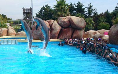 parc aquatique marineland bassin des dauphins
