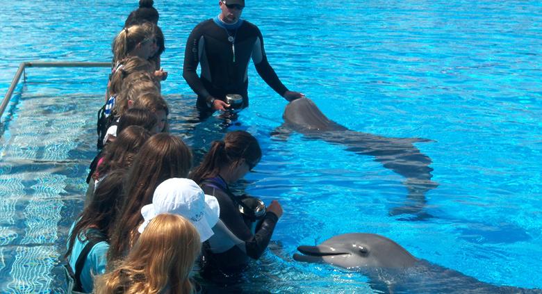 parc aquatique marineland rencontre dauphins