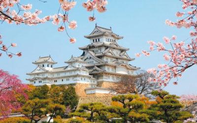 voyage colos japon cerisier
